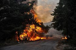 Syria executes 24 people over deadly forest fires