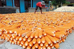 Transforming agrifood systems in the march to end hunger