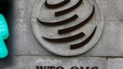 China's 'unfair trade practices' draw heavy fire at WTO trade review