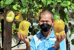 Whole town abuzz over super-sized passion fruit