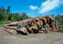 Let foreign workers back in to save timber industry, govt urged